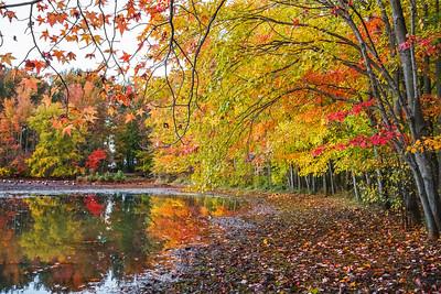 Colorful Shoreline