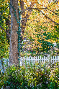 Fall and Fence