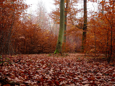 Autumn in Denmark. Photo: Martin Bager.