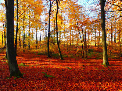 The awesome colours of autumn. Photo: Martin Bager.