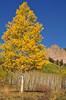 Fall Color near Cimarron