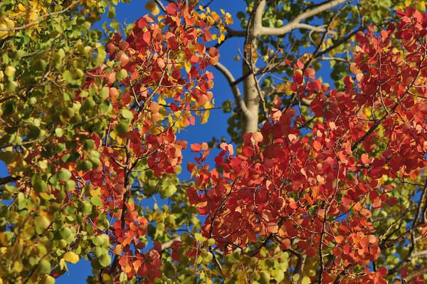 Fall Color Near Mount Silverheels.