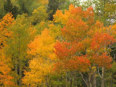 Autumn 2006