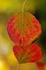 Opposing Leaves
