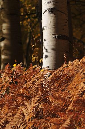 Muted Fall
