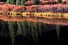 South Mineral Creek beaver pond