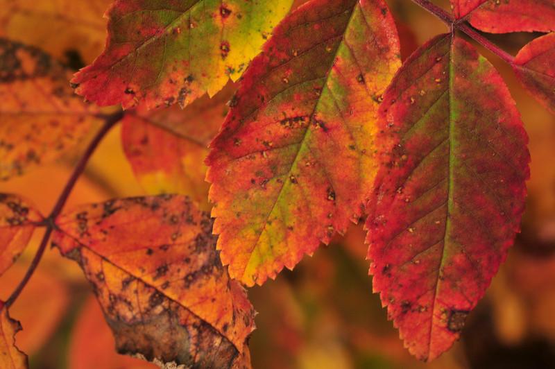 many hues