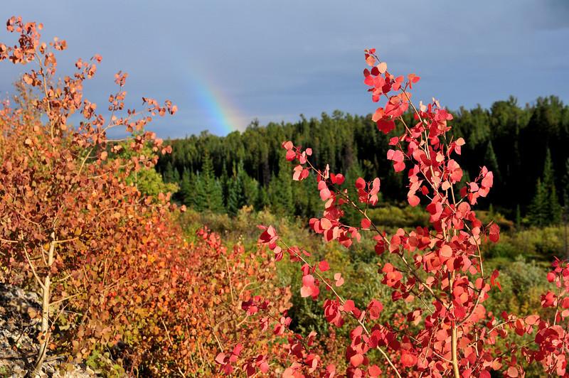 a rainbow of autumn leaves