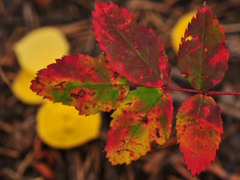 designer leaves
