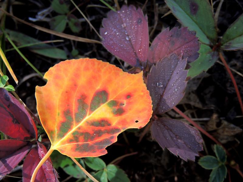 Crested Butte Autumn Color