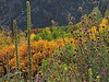 North Rim Autumn Color