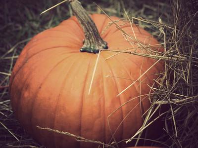 Ganyard Hill Farm // Durham, North Carolina // October 2009