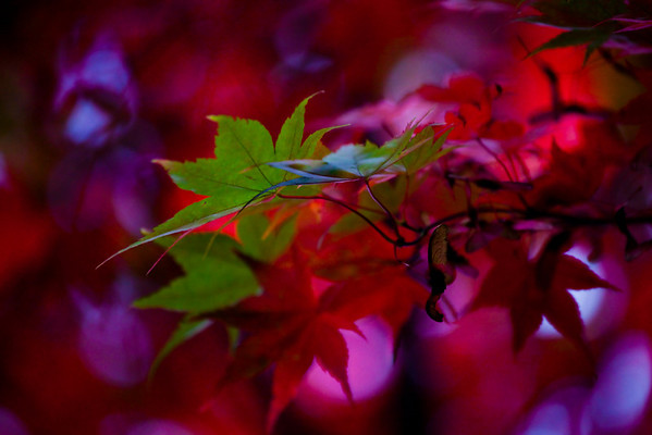 Autumn rouge begins
