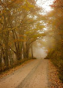 fall_scenes-7309-2