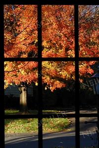 #141  Autumn view through our front storm door