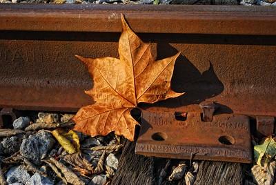 Fallen -- Resting on a Rail