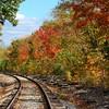 Tracks through the Autumn Trees
