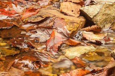 fall_scenes-7436