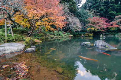 The Autumn Pond of Narita