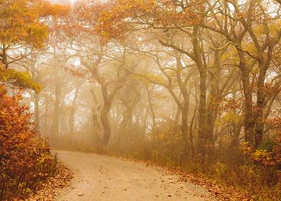 fall_scenes-7318-2