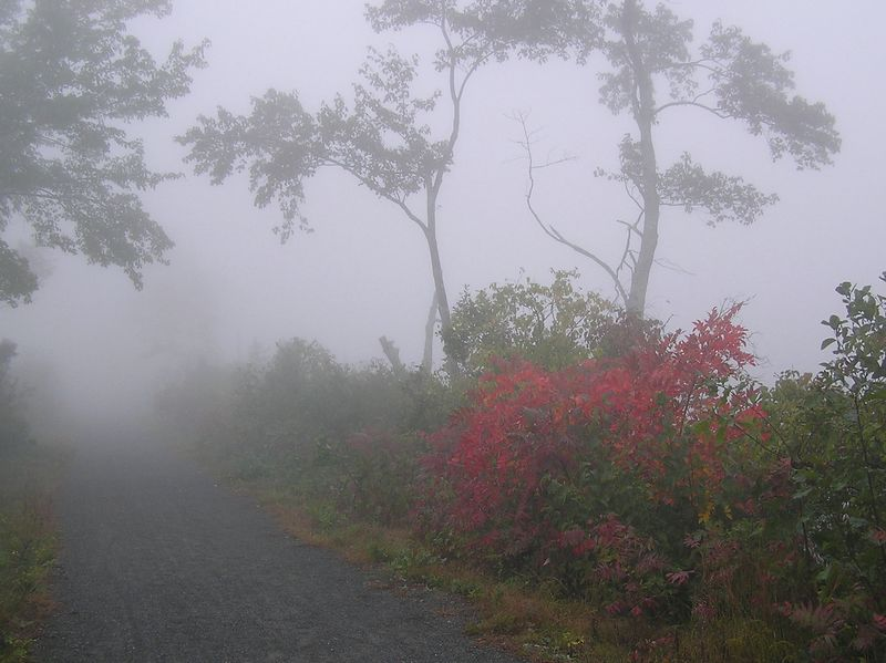 Foggy Fall Morning on the Air Line Trail