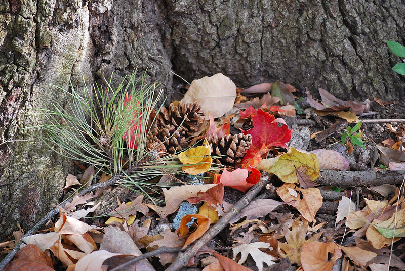 Pine Cones and Autumn Leaves