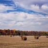 Field of Hay  ----Digital Painting