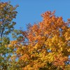 Autumn leaves and the clear blue sky