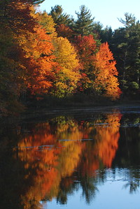 1715  Foliage reflected