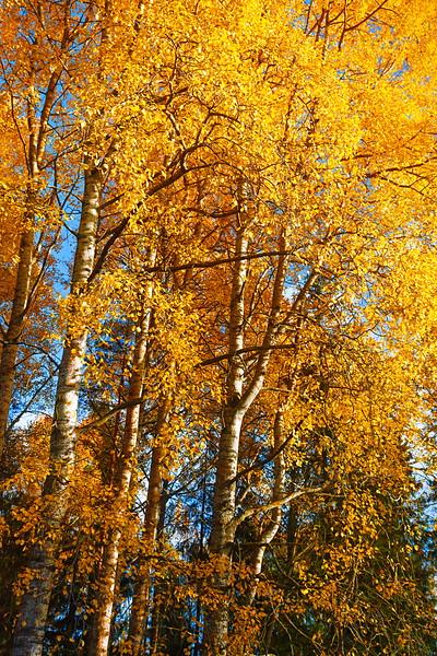 Golden Autumn / Золотая осень