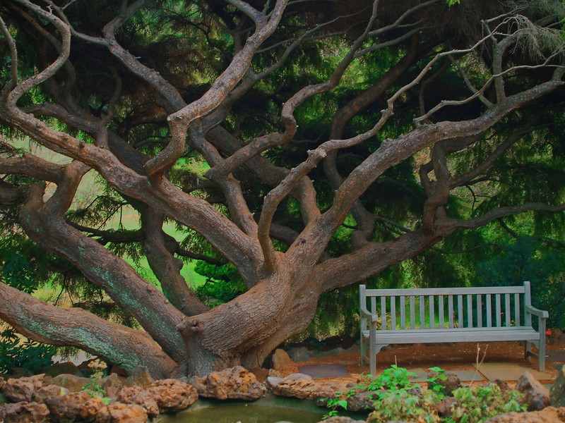 """""""Dream Tree""""  <br /> A special tree photographed at Deep Cut Gardens in Monmouth County, New Jersey. Unfortunately the tree was severely damages in a storm and had to be removed."""