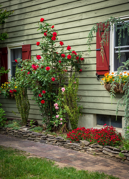 Garden Wall and Roses