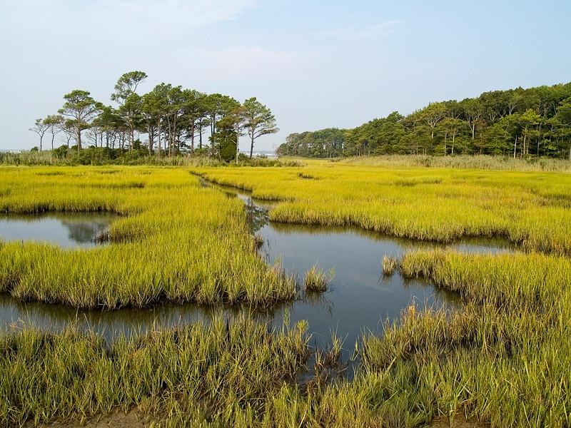"""Estuary""<br /> A wetlands view near Ocean City Maryland."