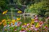 Summer Beauty Central Park
