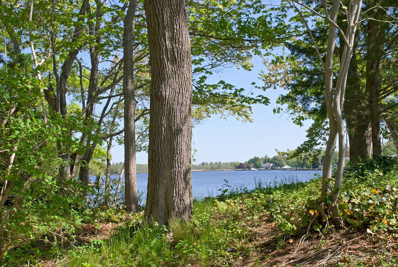 """Lake View from Woods""<br /> A late Spring view of this lake on Long Island,NY."