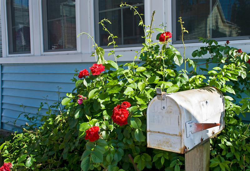 """Mailbox""<br /> A rural mailbox outside a home in a Summer garden."