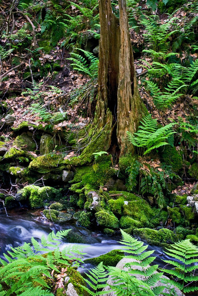 """Forest Green""<br /> Green ferns and moss near this small flowing stream in Stokes State Forest in New Jersey."