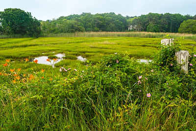 Cape Cod Meadow