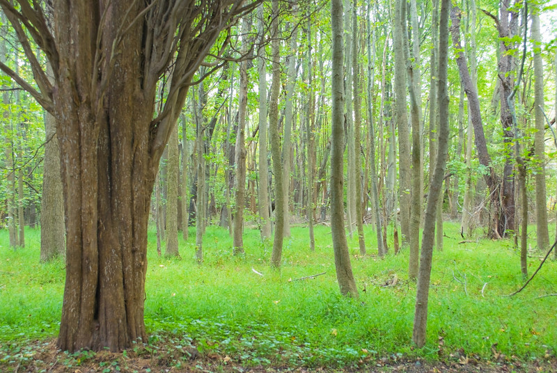 """""""Mystical Forest""""<br /> A Summer woods in Central New Jersey."""