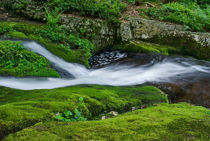 """Moss Carpet and Stream""<br /> A running stream passing through green moss, early Summer in Stokes State Forest in New Jersey."