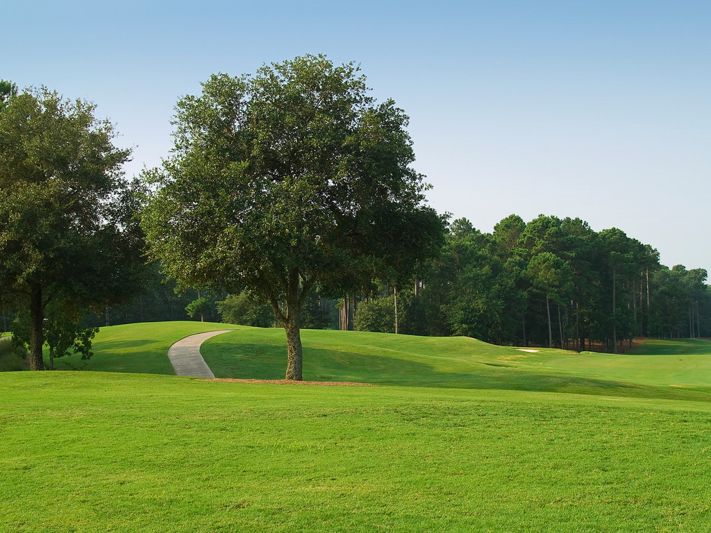 """""""Sunny Course"""" Peaceful quiet and beauty on the TPC golf course near Myrtle Beach, South Carolina."""