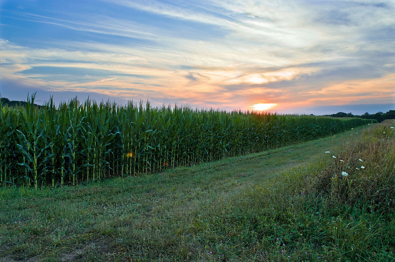 """Cornfield at Sunset""<br /> A cornfield and a Summer sunset in rural Central New Jersey."