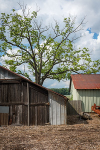 Rural Summer