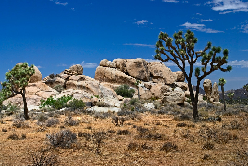 """Formations"" Unusual rock formations are common in Joshua Tree National Park in Southern California."
