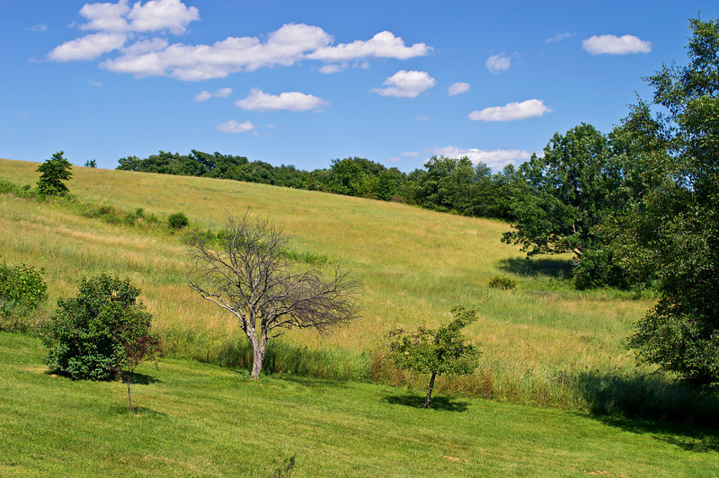 """Summer Hillside""<br /> A Summer view of a hillside in Sussex County, New Jersey."