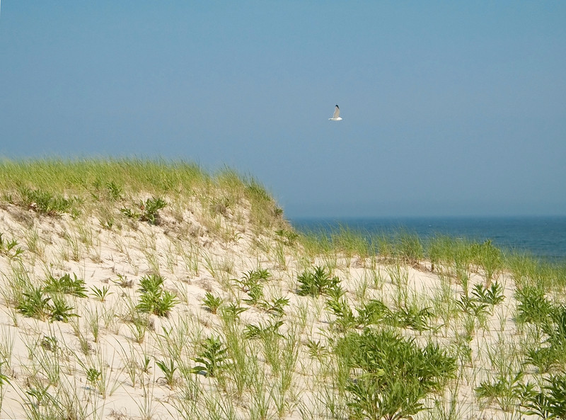 """Peaceful Blue""<br /> Sand dunes and blue near the beach along the Jersey Shore in Island Beach State Park."