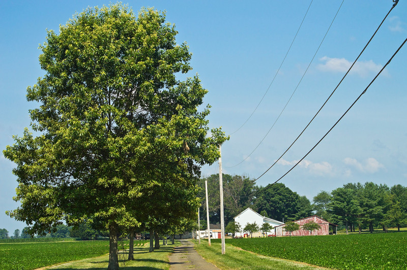 """Rural Summer Landscape""<br /> A rural one lane road through farmland in Central New Jersey."