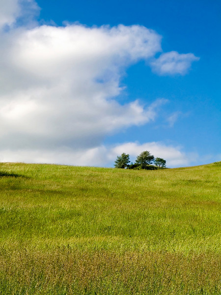 A beautiful Summer hillside in Sussex County New Jersey.