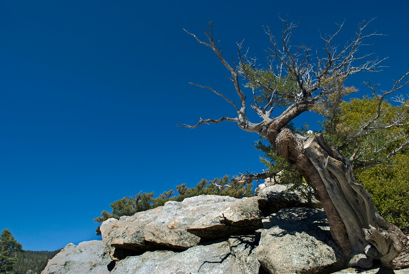 """Mountaintop Tree""<br /> A twisted barren tree on top of the mountain in San Jacinto State Park in Palm Springs, California."