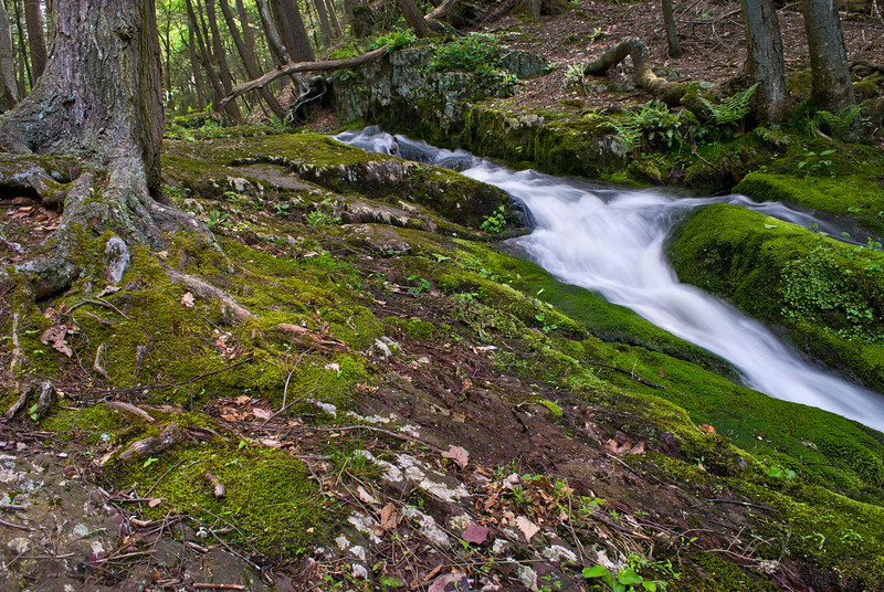 A stream flows through the green foliage of Stokes State Forest in New Jersey during late Spring, early Summer.